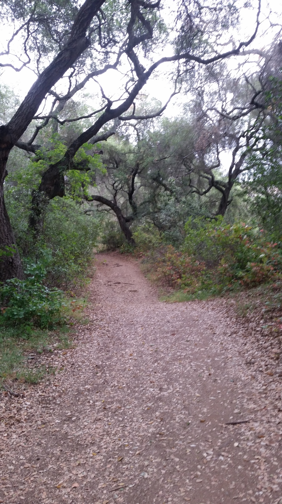 Trail Challenge Series : Englemann Oak Loop