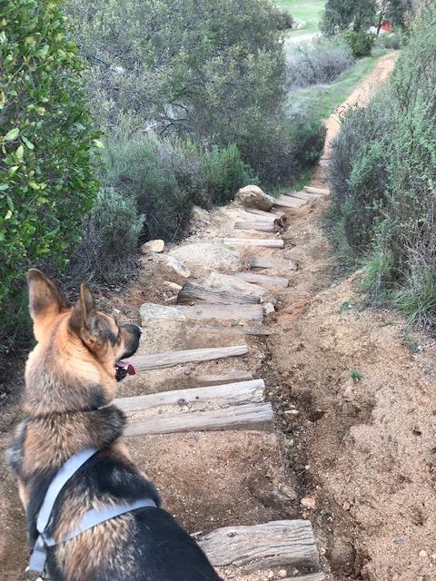 New Adventures : Wilderness GardenPark